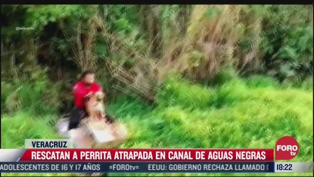 video rescatan a perrita de aguas negras en veracruz