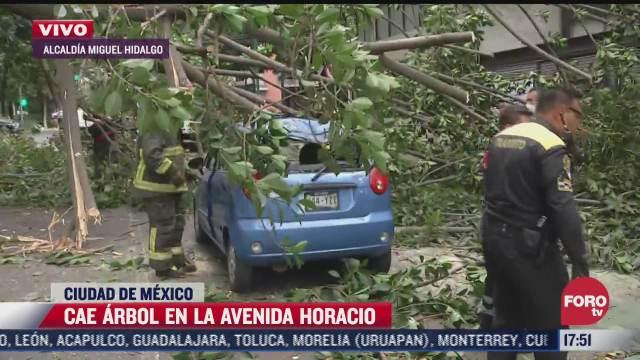 arbol cae sobre dos autos en la ciudad de mexico