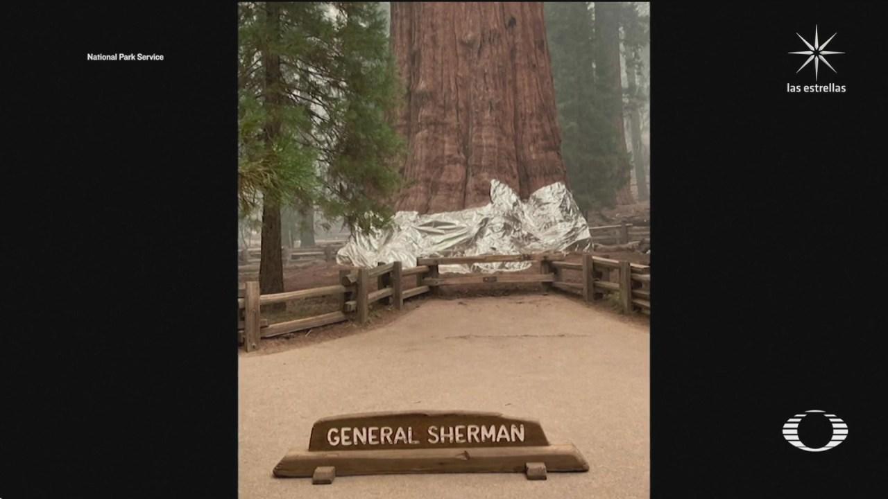 bomberos de california protegen con mantas al general sherman el arbol mas grande del mundo