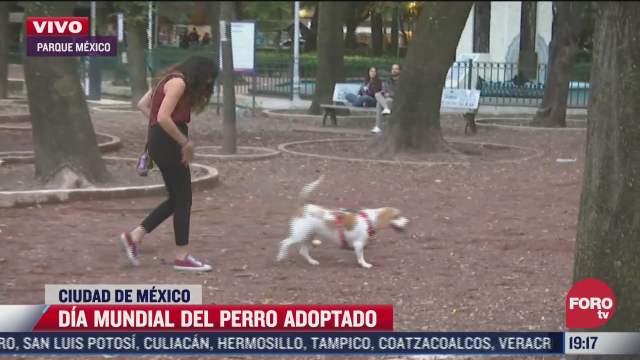 celebran dia mundial del perro adoptado en cdmx