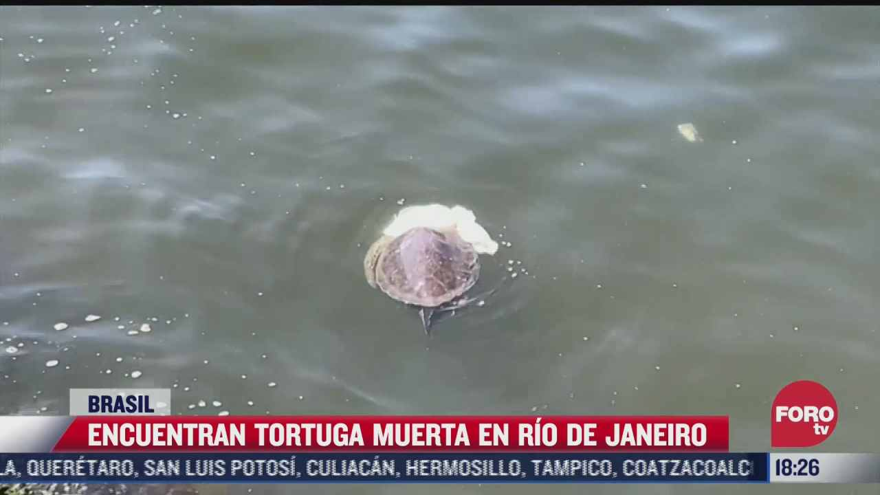 encuentran tortuga muerta en rio de janeiro brasil