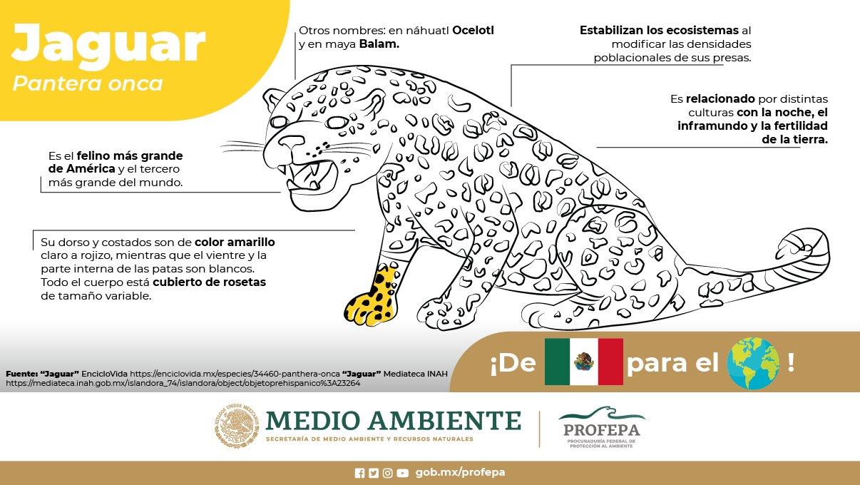 Jaguar, dibujo de la PROFEPA