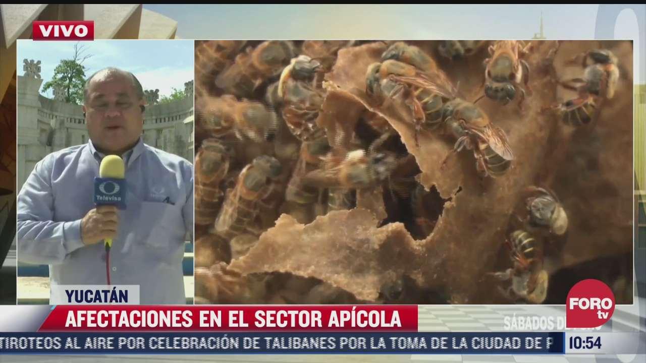 lluvias afectan la produccion de miel en yucatan