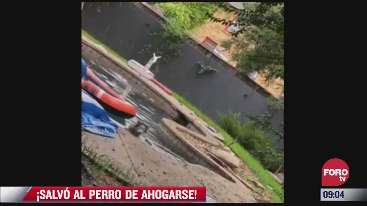 salvan a perro de ahogarse en alberca