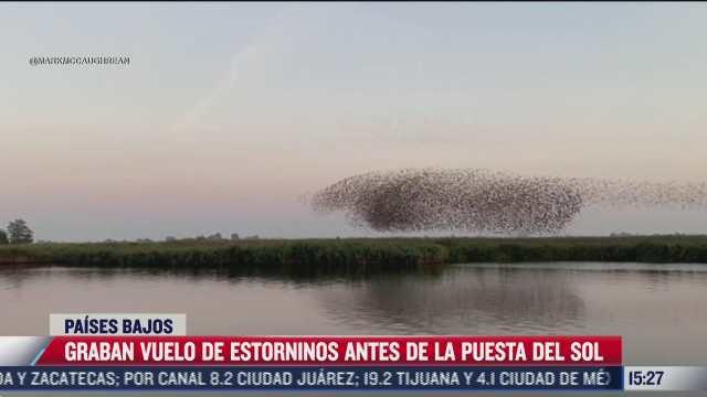 graban espectacular vuelo de estorninos antes de la puesta del sol