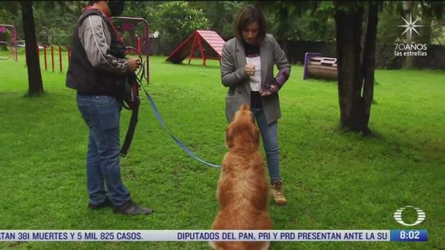 jurgen se jubila como perro de asistencia para personas con movilidad limitada