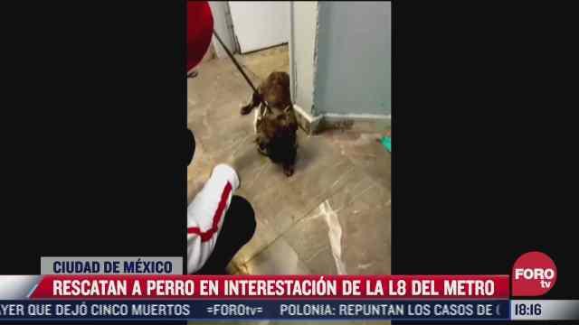 recatan a perro que bajo a las vias del metro