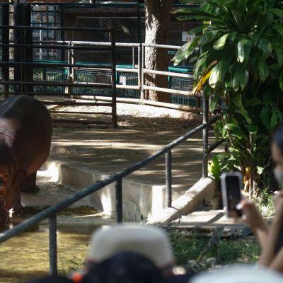 Directores de zoológicos rechazan iniciativas para cerrar