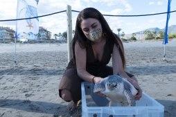 solta de tortugues babaua