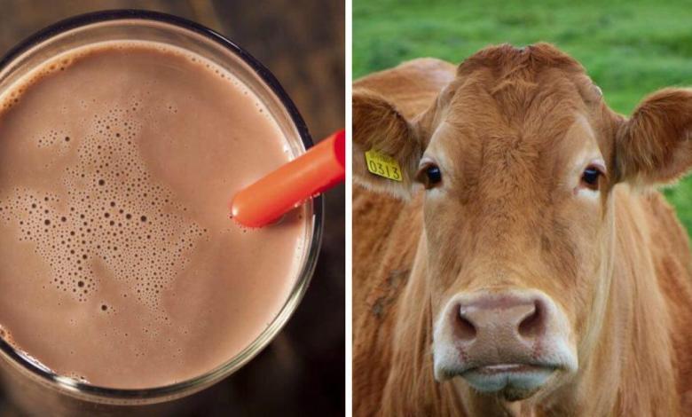 Photo of 16 millones de estadounidenses piensan que la leche chocolatada viene de vacas marrones