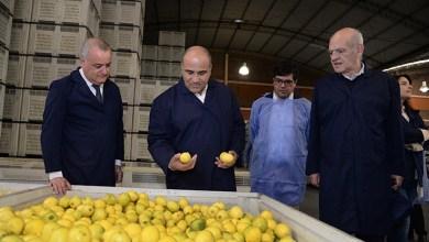 Photo of Tucumán podrá empezar a exportar limones a China