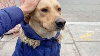 Photo of Un perro espera en la puerta del hospital a su dueño contagiado de coronavirus