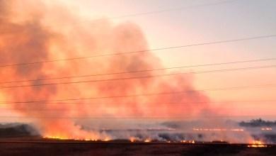 """Photo of Siguen los incendios en el Delta del Paraná y denuncian """"ecocidio"""""""