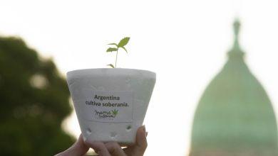 Photo of El Gobierno nacional permitirá el uso medicinal de cannabis