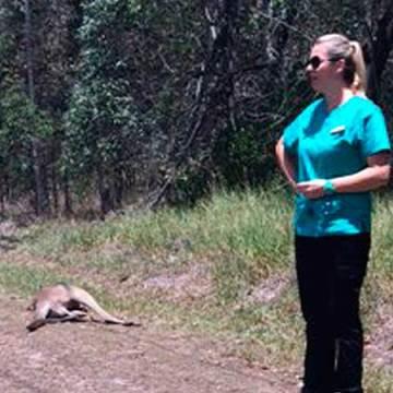 Australia busca a 'asesino serial' de canguros