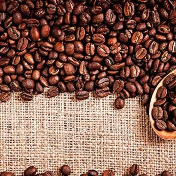 Compradores de café de países de la Unión Europea visitaron Chiapas