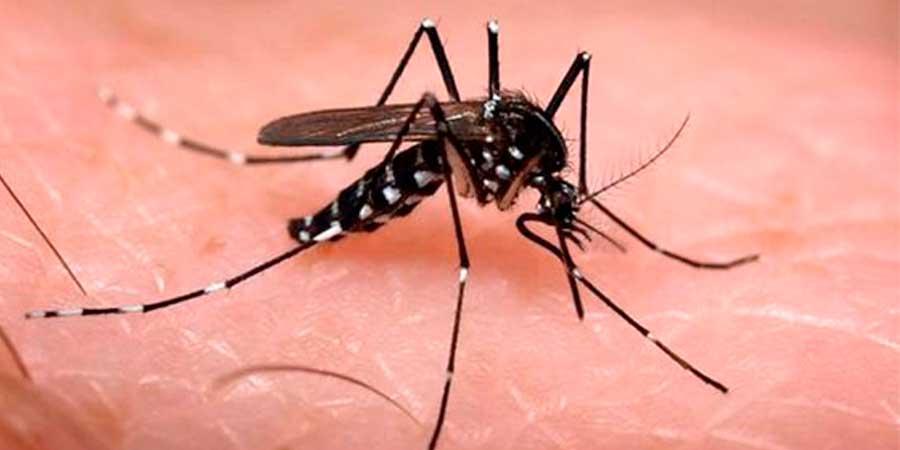 Dengue, chikungunya y Zika, siguen latentes en Chiapas