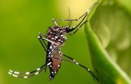 Brasil declara fin de emergencia por virus del zika
