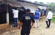 Elementos de la FGE clausuraron granja porcina
