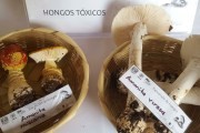 Secretaría de Salud capacita a médicos en el consumo de hongos silvestres tóxicos