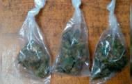 "En operativo ""antipandillas"", SSyPC decomisa droga"