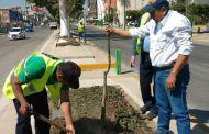 El mejoramiento de la imagen urbana es una realidad en Tuxtla Gutiérrez
