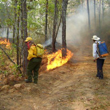 En la frailesca, combaten incendios forestales registrados