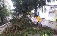 Árboles caídos, semáforos colapsados y encharcamientos fue el saldo de la lluvia registrada este Lunes