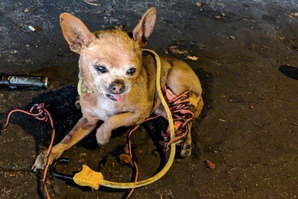 Hasta 9 años de cárcel a quien maltrate animales o los use con fines cosméticos, plantea Monreal
