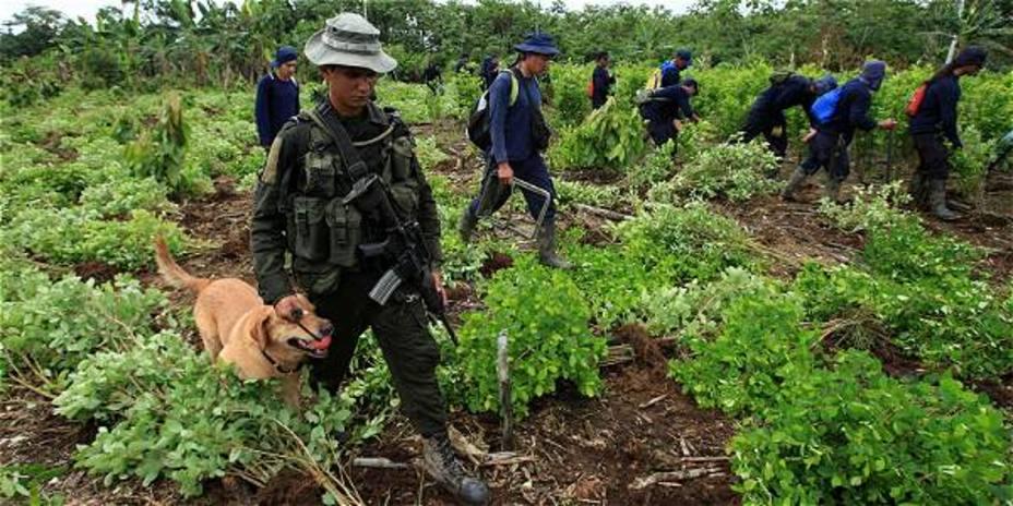 Pretenden acabar con el 77% de la coca sembrada actualmente en Colombia