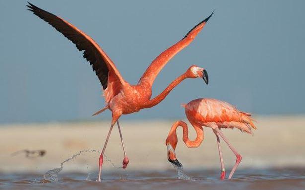 Curiosas aves
