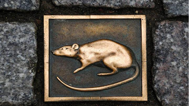 Ratas incrustadas en la calzada señalan el camino de la leyenda