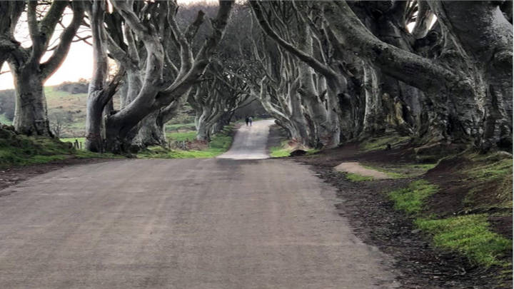 Dark Hedges, hermoso camino directo a Gracehill House