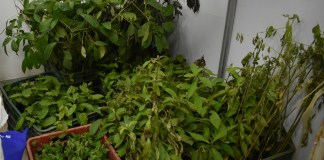 Programa Reforestación 2017, SER San Antonio