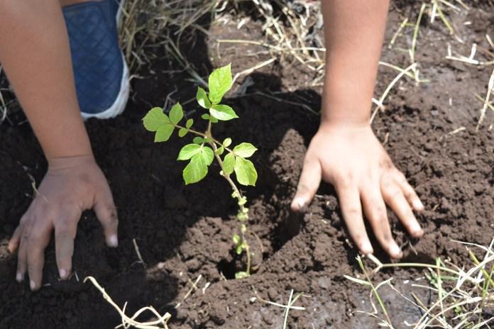 Reforestación, ISA