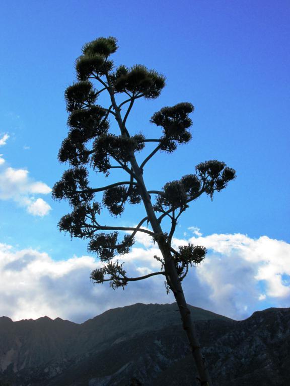 La flor, por su tamaño, parece un árbol. (Foto: Pablo Harvey).