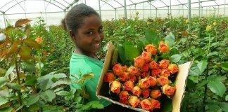 Piano da 100.000 posti di lavoro in Etiopia