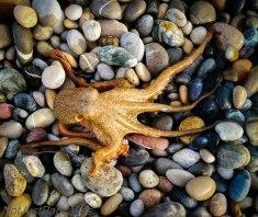 Bleksprut