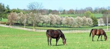 Bluegrass countryside in spring