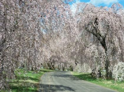 Spring at Lexington Cemetery