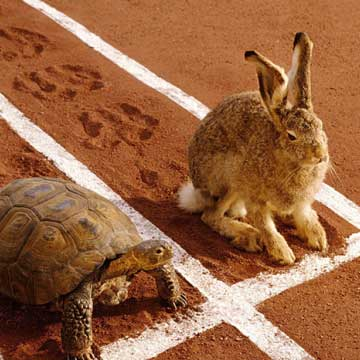 Tortise and hare sitting next to each other on a track