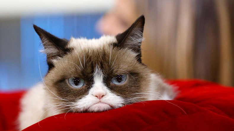 Episode 180: Pour One Out for Grumpy Cat