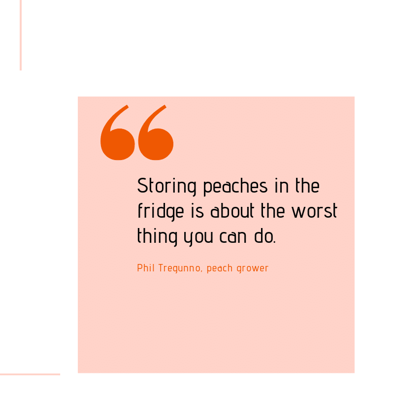 "Graphic with quote from Phil Tregunno, a peach grower. ""Storing peaches in the fridge is about the worst thing you can do."