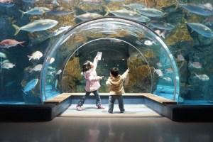 インスタ映えポイント満載の美しい「のとじま水族館」【能登島】