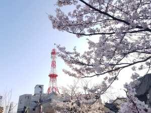 美しい桜がたくさん!地元アンバサダーによる七尾市のおすすめ桜スポット【七尾市】