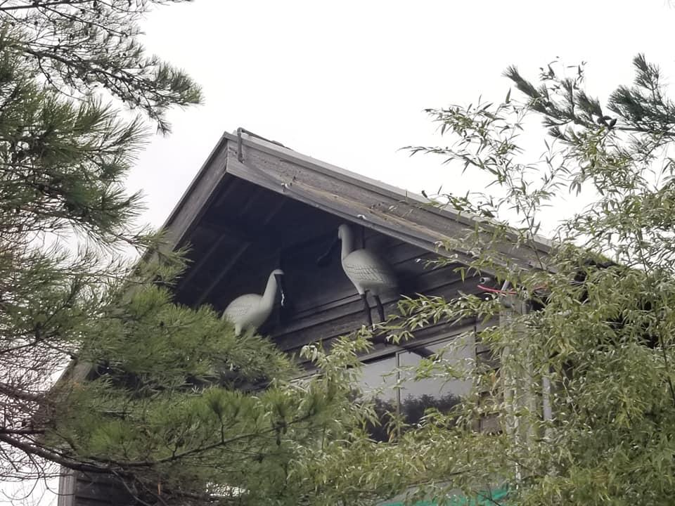 能登に飛来する野鳥を観察しよう!重要湿地に指定されている七尾西湾でバードウォッチングができる田鶴浜野鳥公園【七尾市】