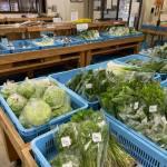 志賀町の町おこし「ころ柿」と地元農家の野菜「農産物直売所旬菜館」【志賀町 道の駅ころ柿の里しか内】