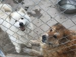 News on Yulin and Mr Zhao