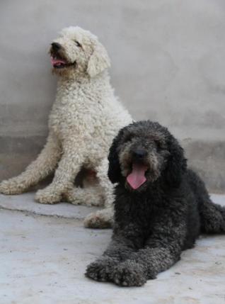 Adopt China Chinese Dog Meat Trade NoToDogMeat 06