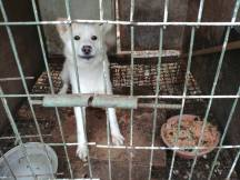 dogs suffering
